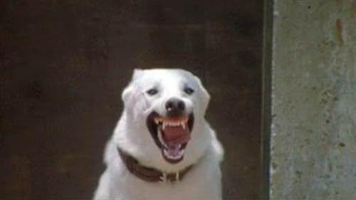 Trailer for White Dog