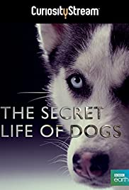 Secret Life of Dogs (2013) 1080p
