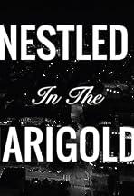 Nestled in the Marigolds