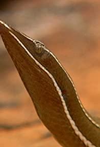 Primary photo for Australia's Lost Eden