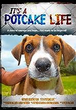 It's a Potcake Life