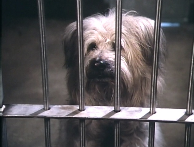 Johnny the Dog in Here's Boomer (1980)