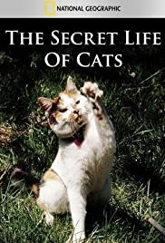 The Secret Life of Cats (2014) 1080p