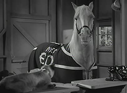 Best movies The Horse and the Pussycat [BluRay]
