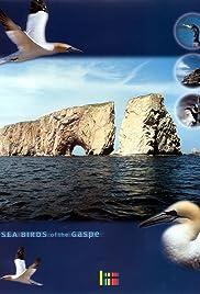 Sea Birds of the Gaspé Poster