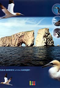 Primary photo for Sea Birds of the Gaspé