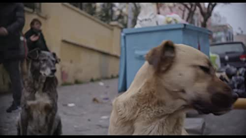 STRAY explores what it means to live as a being without status or security, following three strays as they embark on inconspicuous journeys through Turkish society. Zeytin, fiercely independent, embarks on adventures through the city at night; Nazar, nurturing and protective, easily befriends the humans around her; while Kartal, a shy puppy living on the outskirts of a construction site, finds companions in the security guards who care for her. The strays' disparate lives intersect when they each form intimate bonds with a group of young Syrians with whom they share the streets. Director Elizabeth Lo's award-winning film is a critical observation of human civilization through the unfamiliar gaze of dogs and a sensory voyage into new ways of seeing.