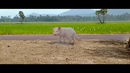 Bunty, the little pink piglet is the apple of Chanti's (Sathwik) eye. But what happens when this innocent little creature is embroiled with people who each have their own agenda to seek?