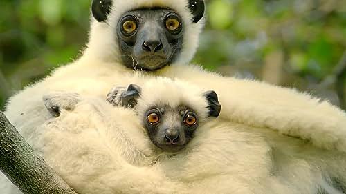 Islands of Wonder: Madagascar