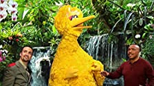 Big Bird's Move