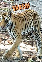 Shashi: Tiger Encounters