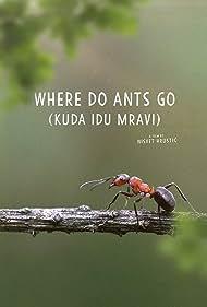 Where Do Ants Go (2018)