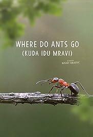Where Do Ants Go Poster
