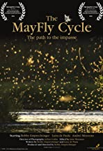The Mayfly Cycle