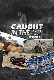 Caught in the Act (2015)
