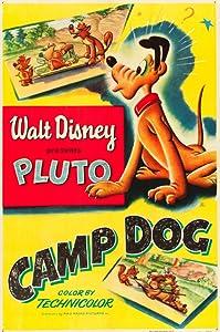 Camp Dog USA