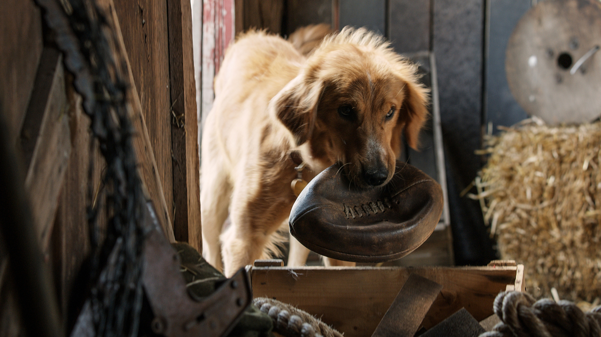 Josh Gad in A Dog's Purpose (2017)