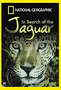 Primary photo for In Search of the Jaguar