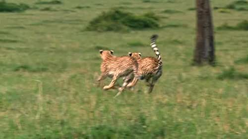 """Chasing a Dog"""