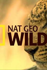 NatGeo Wild: Otter Town (TV Series 2016) - IMDb