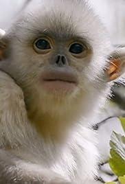 Mystery Monkeys of Shangri-La Poster