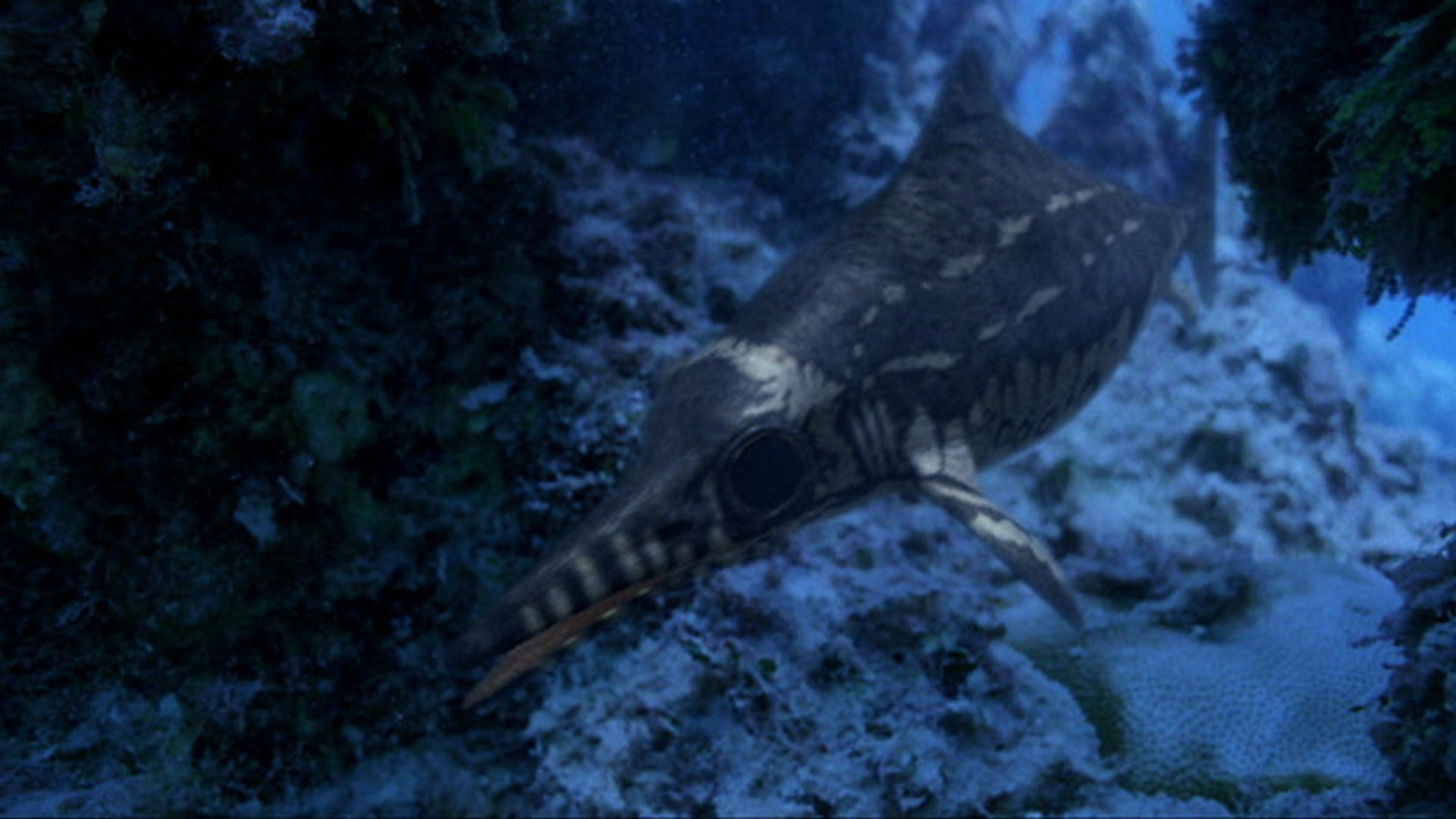 Cruel Sea 25