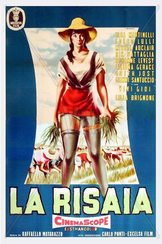 La risaia (1956)