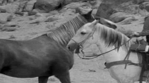 The Adventures Of Champion The Wonder Horse: Renegade Stallion