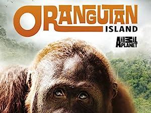 Where to stream Orangutan Island