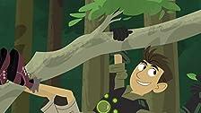 Rainforest Stew