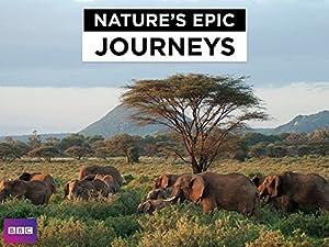 Nature's Epic Journeys