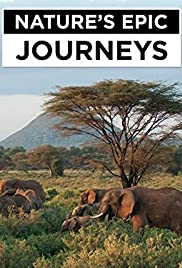 Nature's Epic Journeys Poster