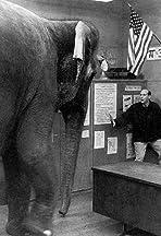Where the Elephant Sits