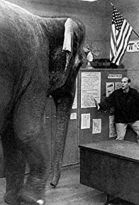 Primary photo for Where the Elephant Sits