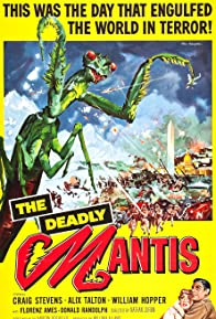 Primary photo for The Deadly Mantis