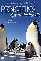 Penguins: Spy in the Huddle