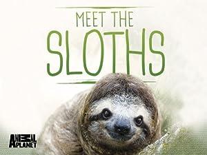 Where to stream Meet the Sloths
