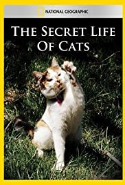 The Secret Life of Cats Poster