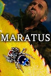 Maratus Poster