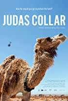 Judas Collar