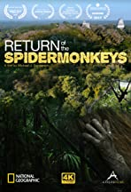 Return of the Spider Monkeys