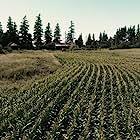 Scarecrows (2017)