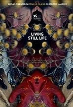 Living Still Life