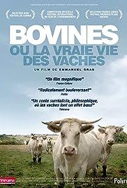 Bovines Poster