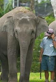 Flight of the Elephants Poster