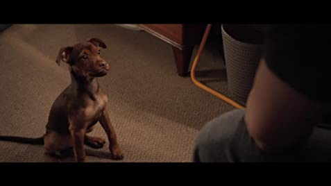 A Dog's Way Home (2019) - IMDb