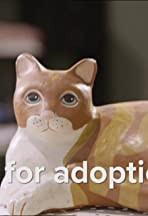 Up for Adoption