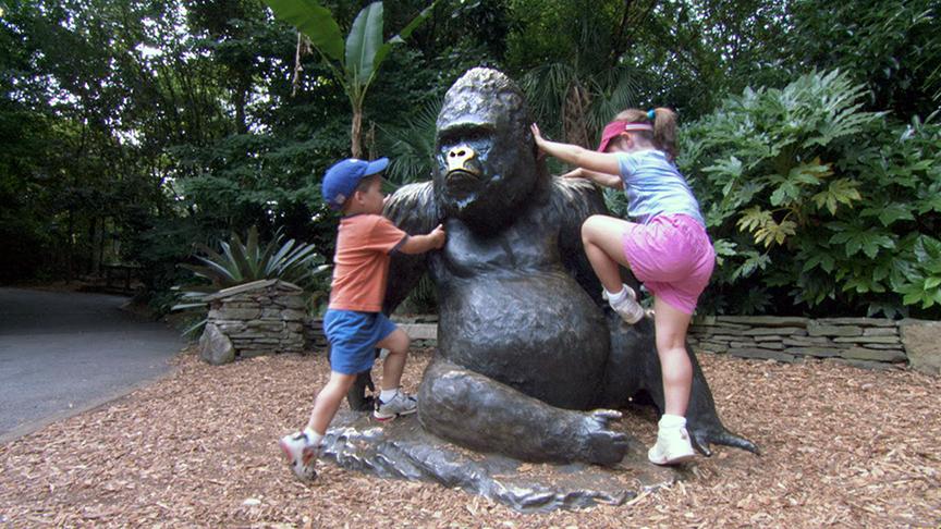 Famous Gorilla - Willie B