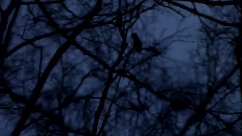 Mystery of Slender man 3 - Official trailer (2016)