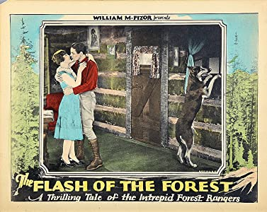 The Flash of the Forest USA